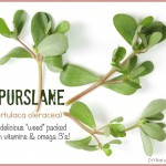 Purslane is A Delicious and Nutritious Plant To Try
