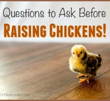 Raising Chickens? Questions You Need To Ask First!