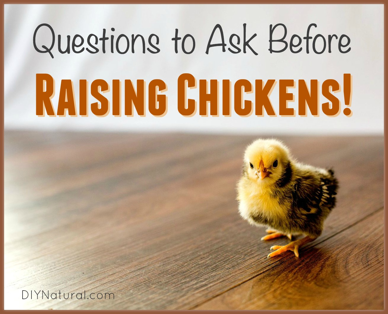 Raising Chickens All The Questions You Need To Ask First