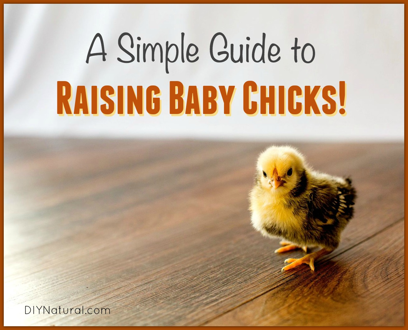 Raising Chicks (Baby Chickens) Is