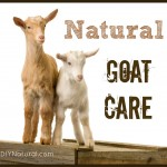 Raising Goats and How to Care for them Naturally