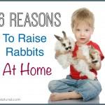 Six Reasons To Start Raising Rabbits at Home
