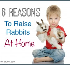 Six Reasons To Start Raising Rabbits at Home