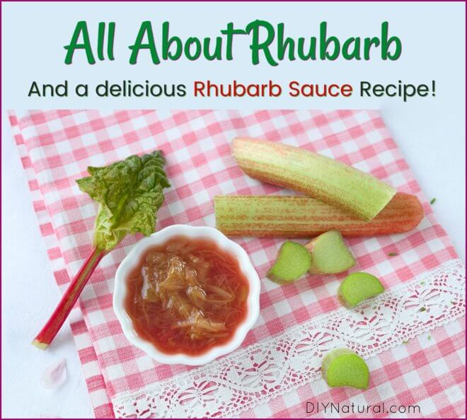 Rhubarb Sauce and Jam Recipe