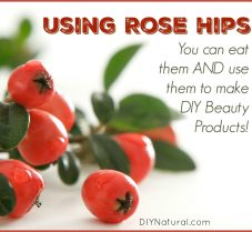 Rose Hips: Eating and Using in DIY Beauty Products