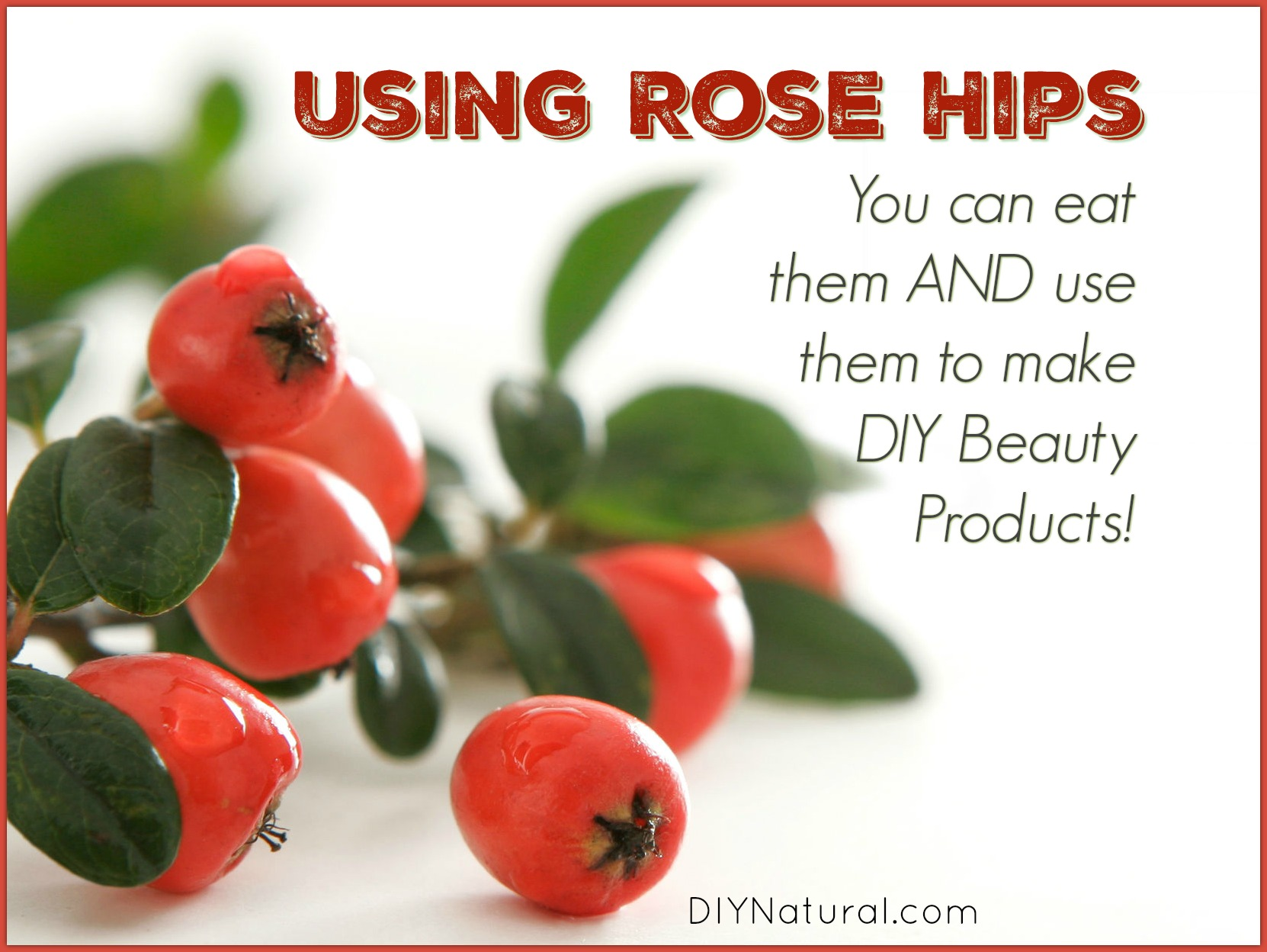 How to dry rosehip: tips and tricks 89