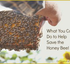Simple Ways You Can Help To Save The Honey Bees