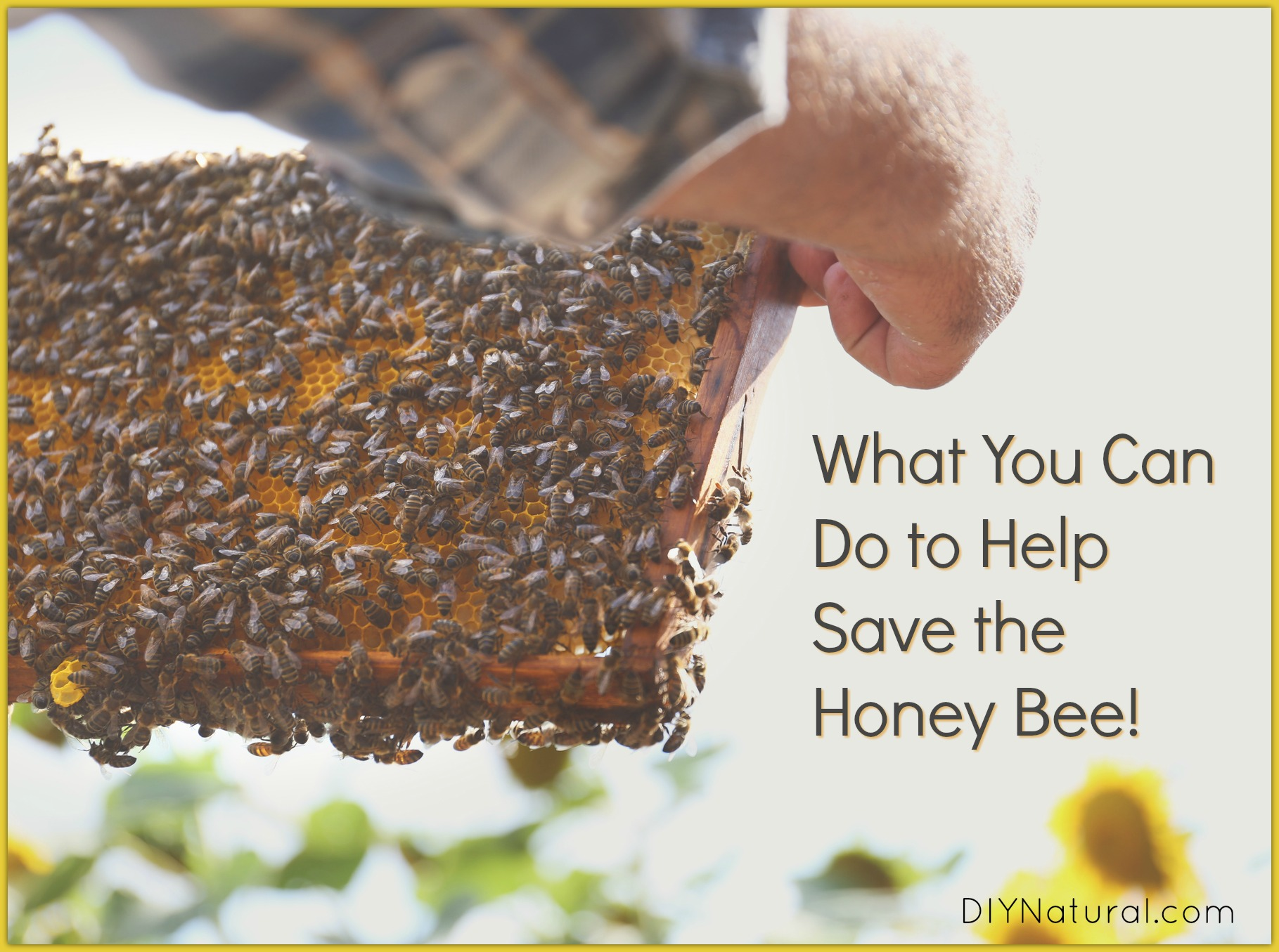 How to Help Save Honey Bees picture
