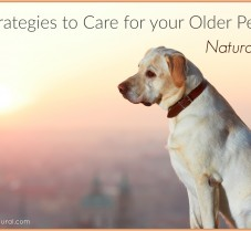 Natural Strategies to Care for Senior Dogs and Cats