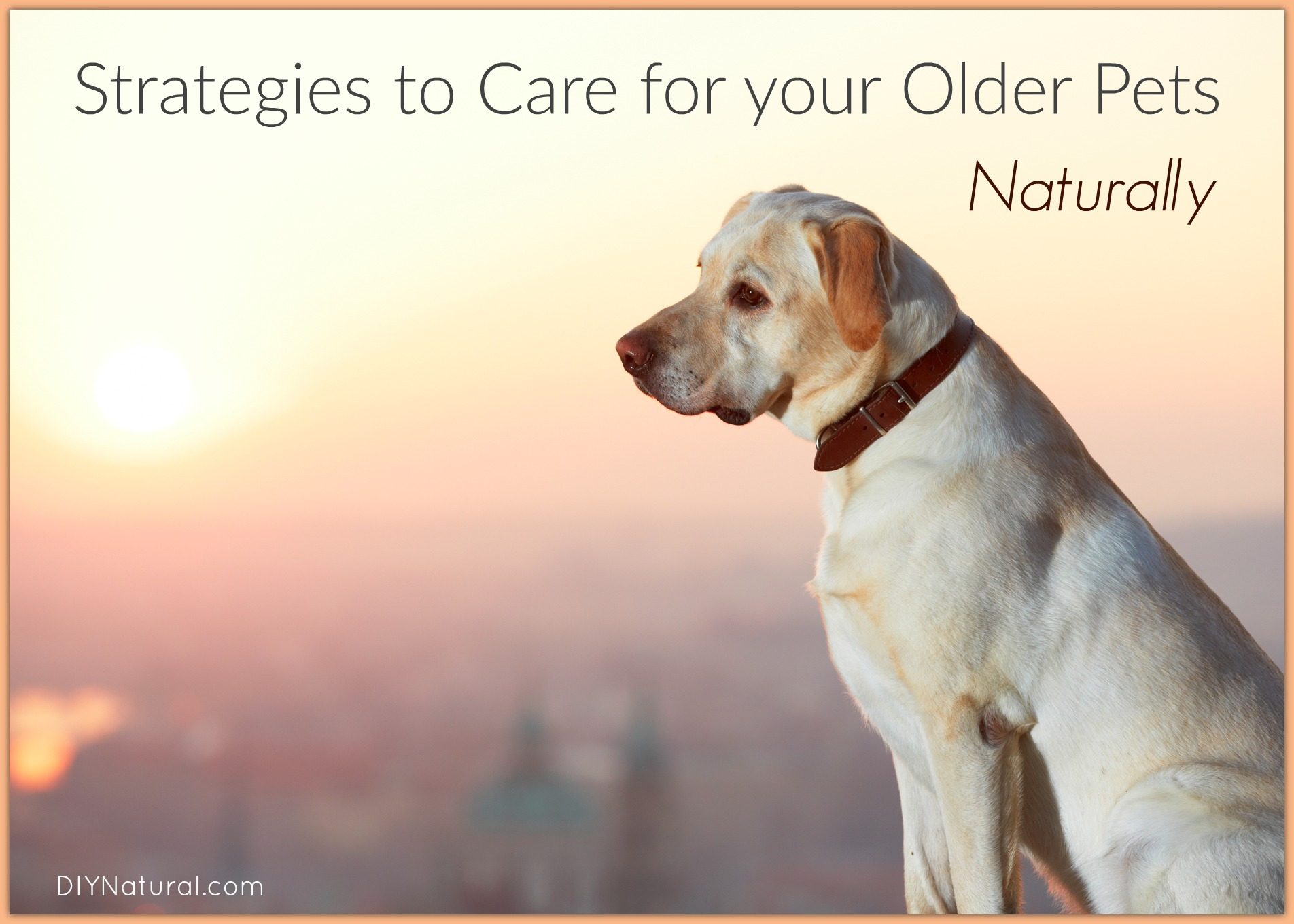 Natual Health For Dogs And Cats