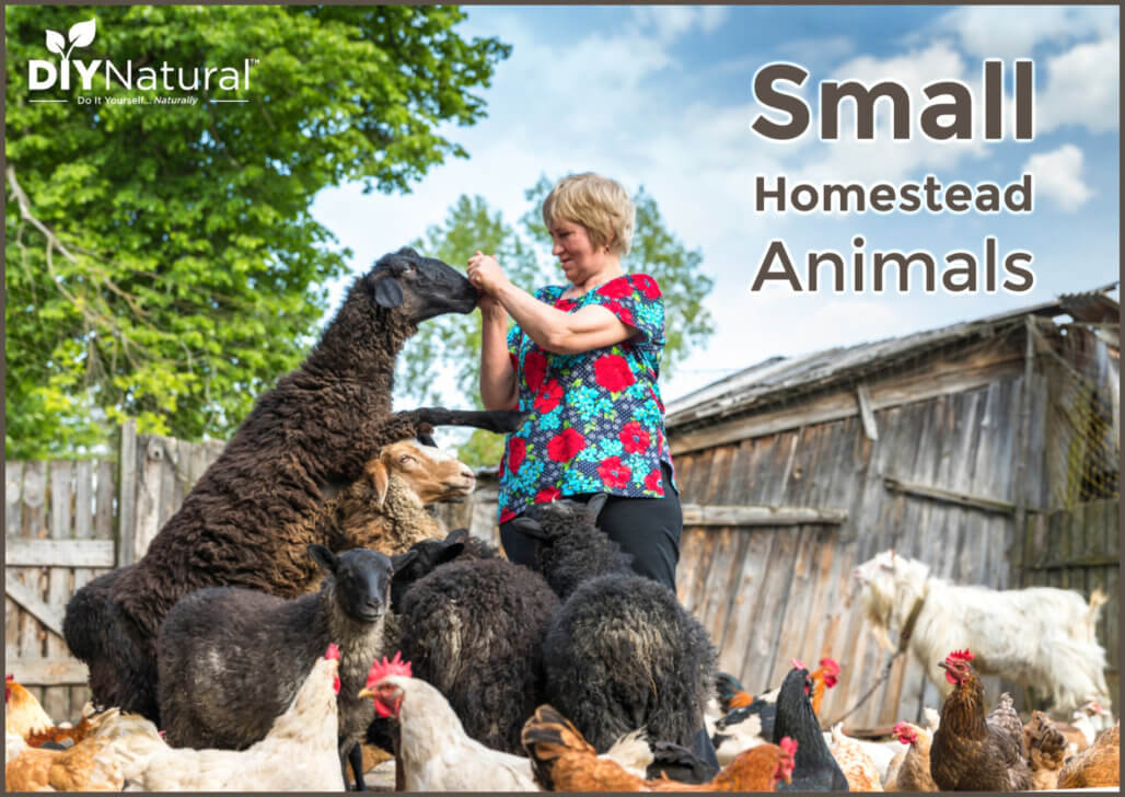 Great Small Farm Animals For Small Homesteads