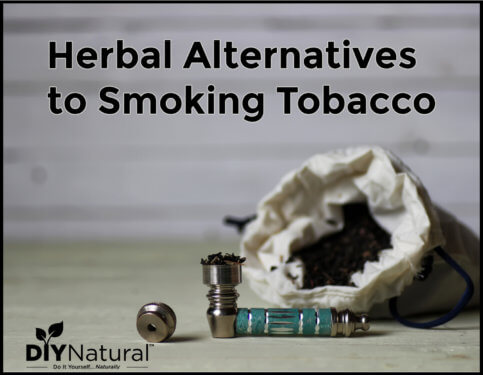 Smoking Alternatives Herbs You Can Smoke