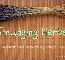 Herbs To Use For Your Homemade Smudge Sticks
