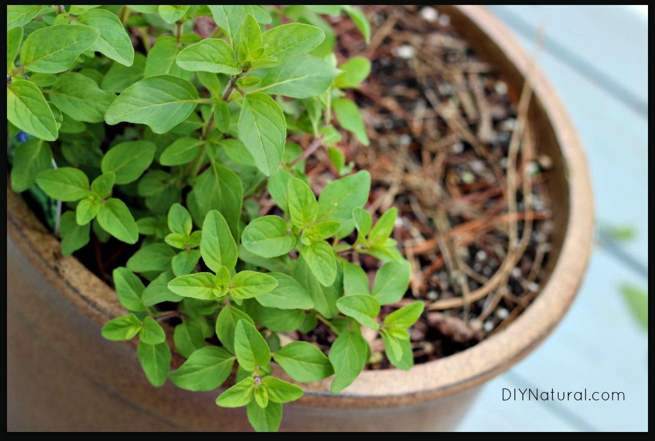 Flowers that like sun and moist soil - Soil Moisture 1