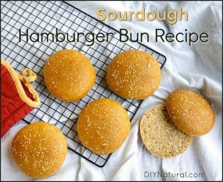 Sourdough Hamburger Bun Recipe