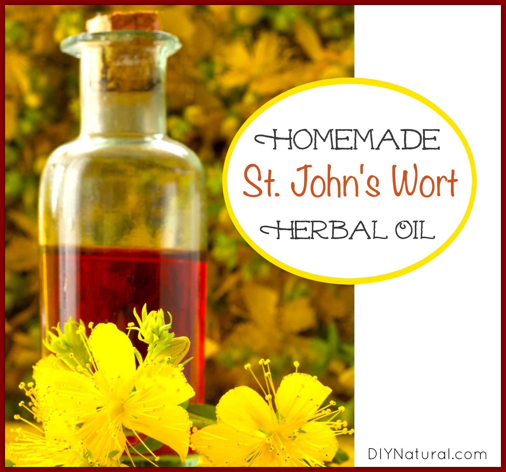 Useful properties and contraindications of St. Johns wort