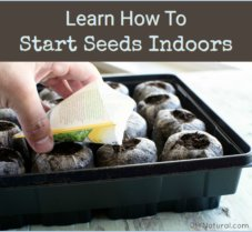 The Many Benefits of Learning to Start Seeds Indoors