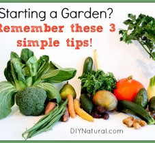 Important Tips to Consider Before Starting A Garden