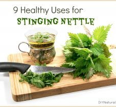9 Ways to Use Stinging Nettle for Health and More
