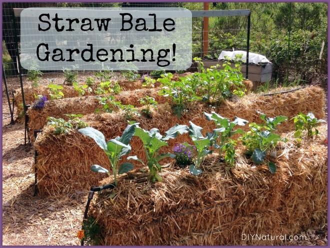 growing plants in hay bales Straw Bale Gardening