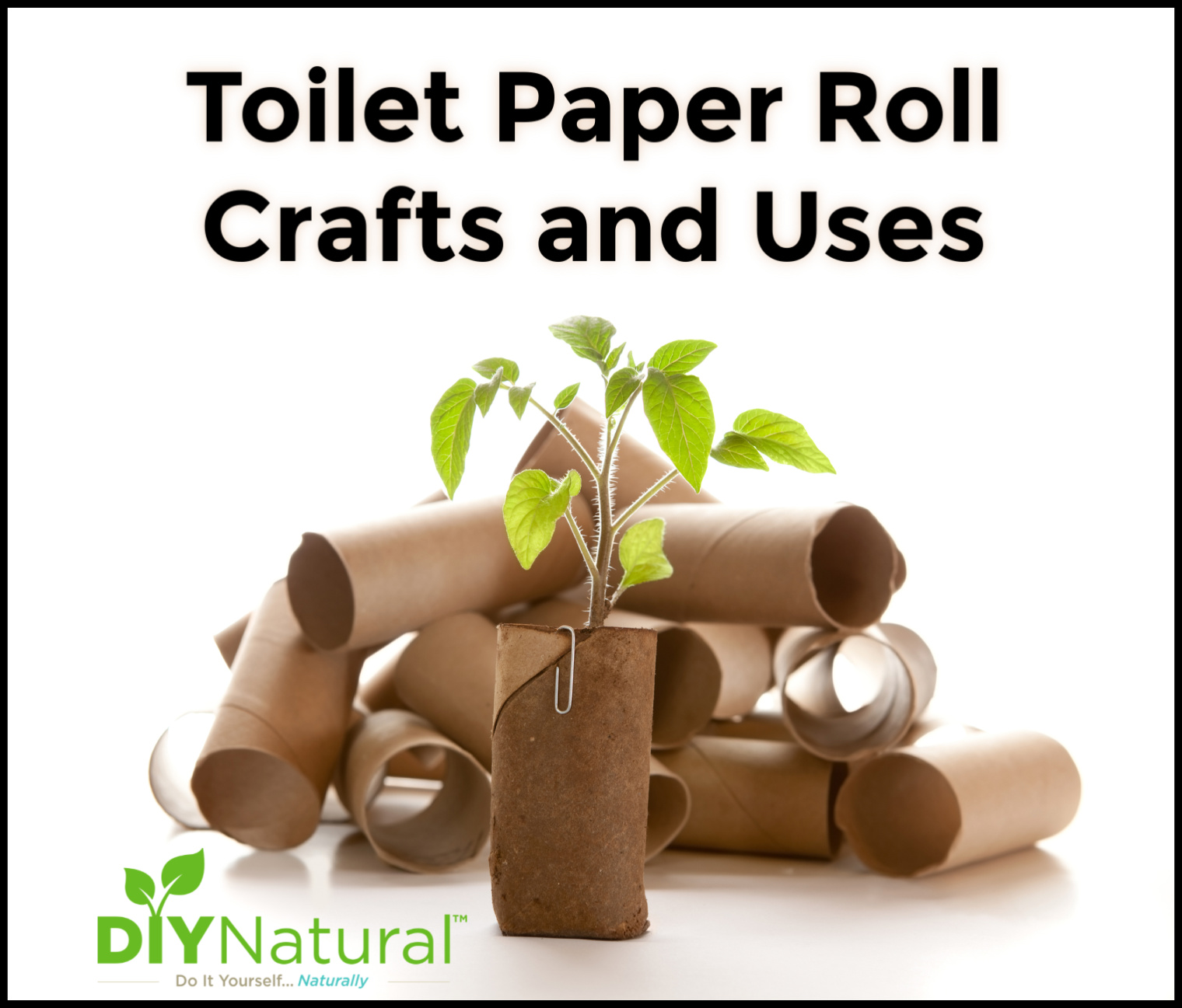 Toilet Paper Roll Crafts 25 Ideas For