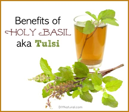 Tulsi and Holy Basil Benefits