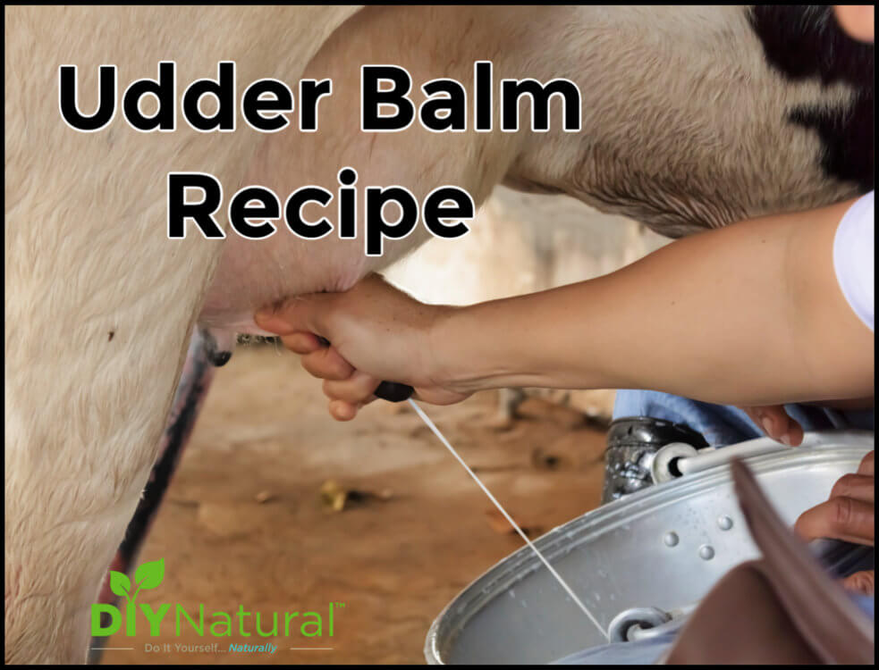 Homemade Udder Balm: Not Just For Goats & Cows
