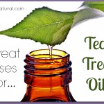 12 Every Day Uses for Tea Tree Essential Oil