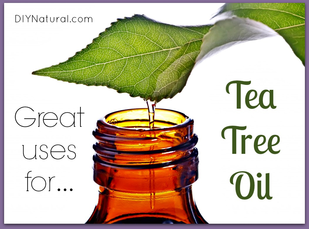 Tea Tree Oil For Ear Fungus