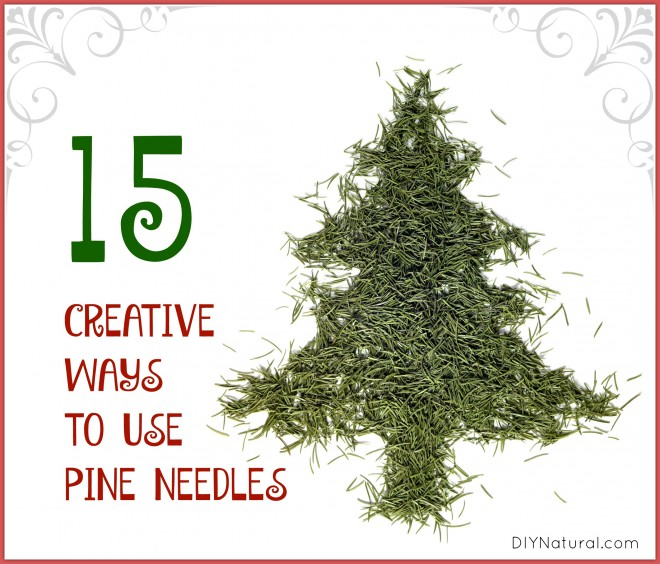 Pine Needles are Useful: Here Are 15 Ways to Use Them