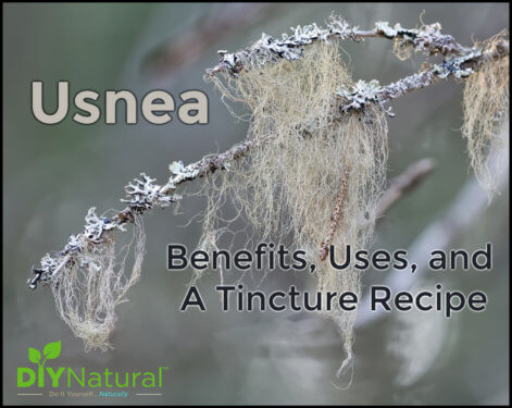 Usnea Benefits Tincture