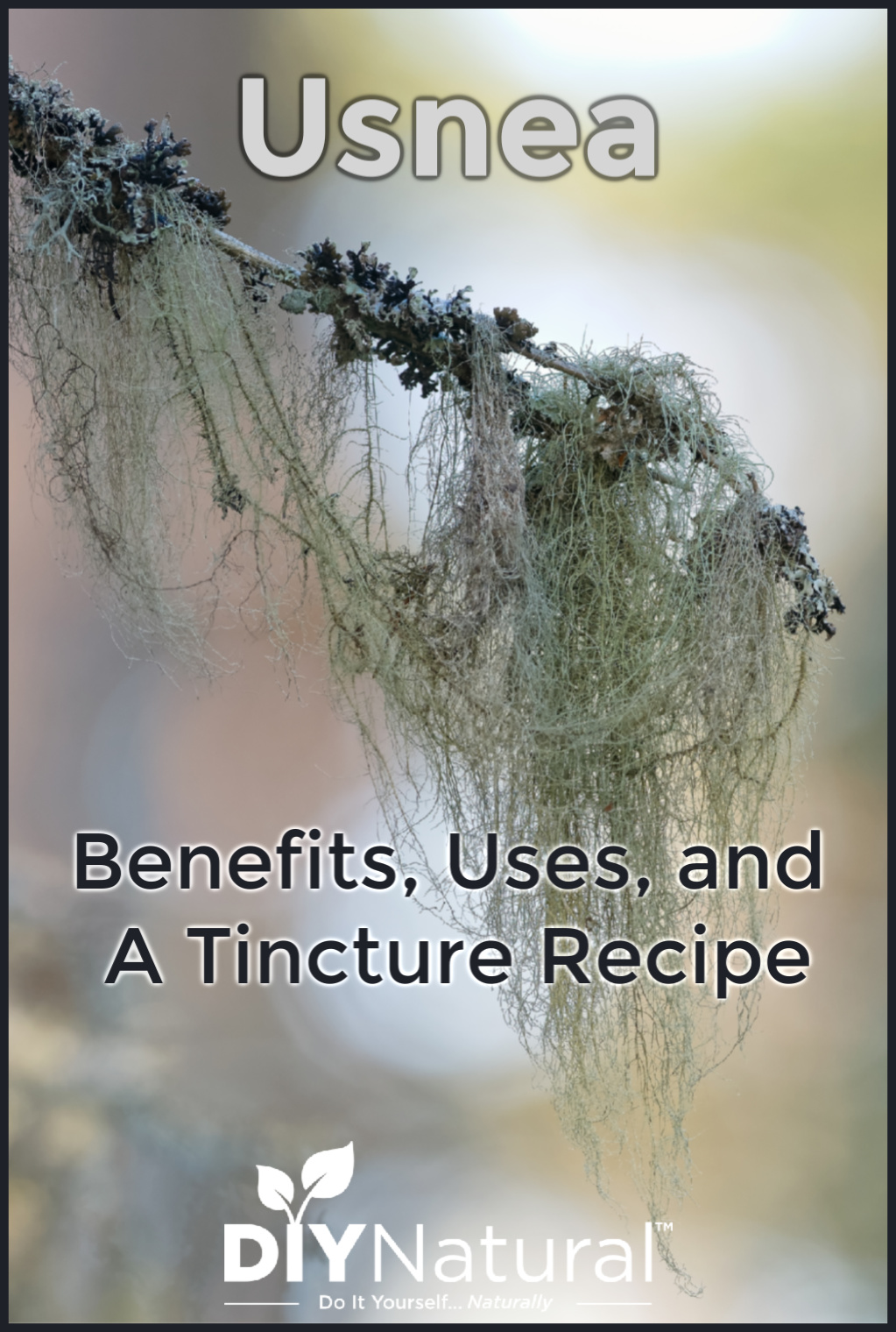 Usnea: What It Is, What Its Benefits Are, and A Usnea