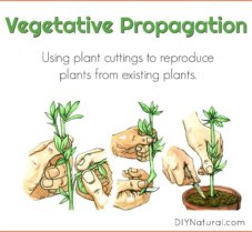 Using Plant Cuttings to Make More Plants for Free!