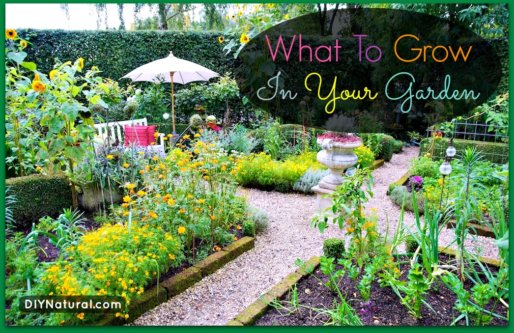 What to Grow in a Garden