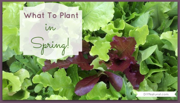 What to plant in spring