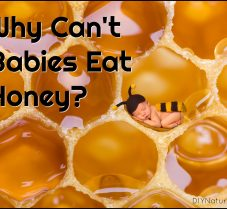 Why Can't Babies Eat Honey? Or Can They? Let's See.