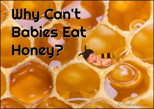 Why Can't Babies Eat Honey