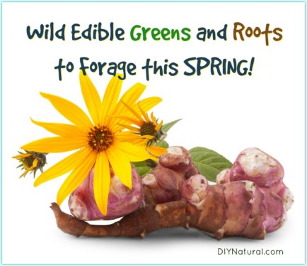 Wild Edibles Edible Plants