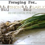 Foraging For Onions Garlic & Other Spring Herbs