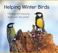 Surprising Ways to Help Winter Birds