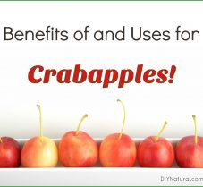 Uses and Benefits of Crabapples & How to Grow Them