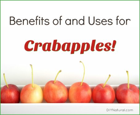 Uses for Crabapples